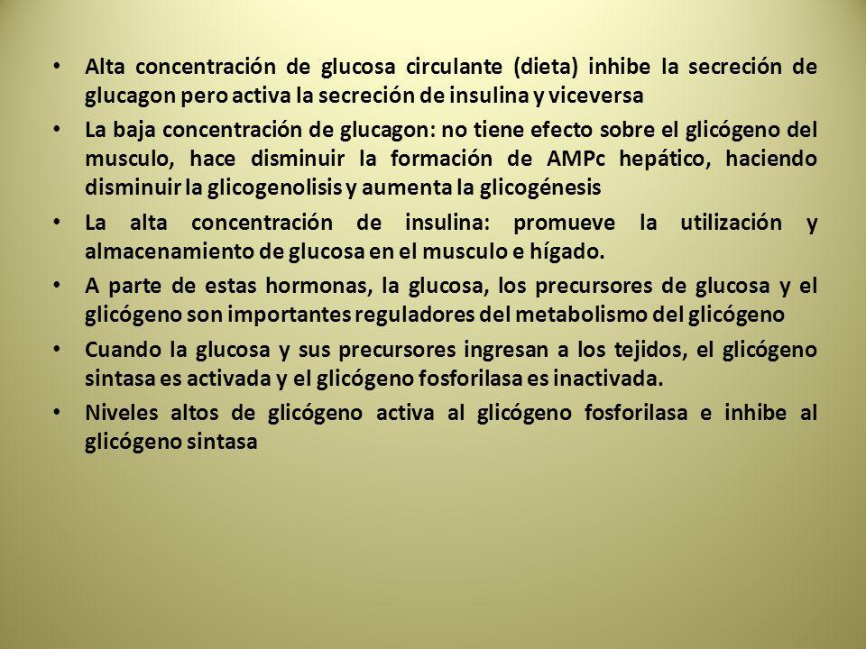 Alta concentración de glucosa circulante (dieta) inhibe la secreción de glucagon pero activa la secreción de insulina y viceversa