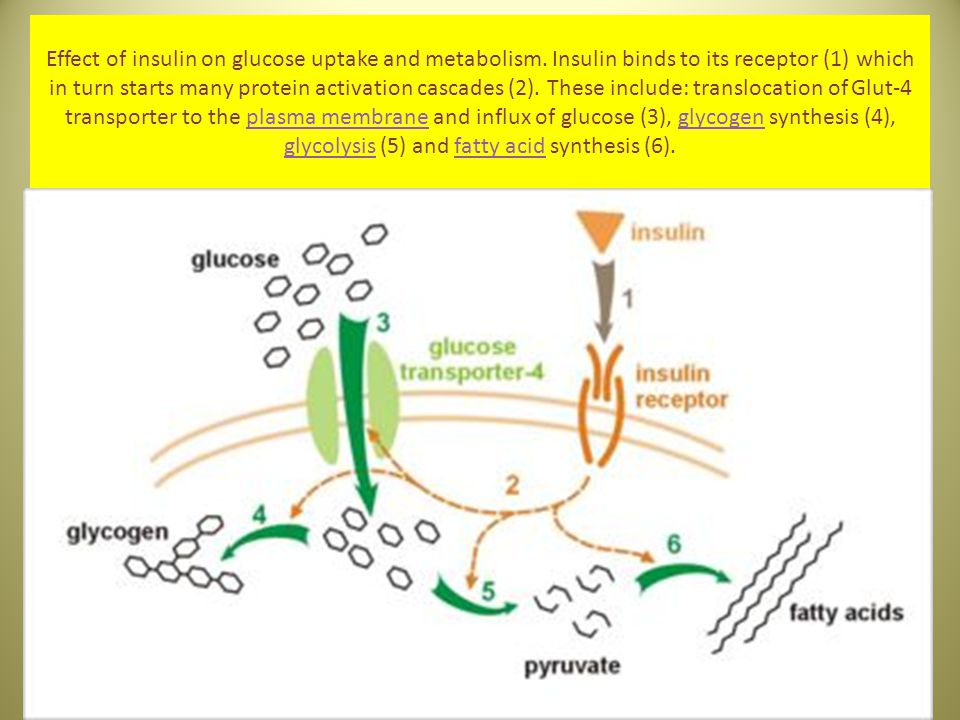 Effect of insulin on glucose uptake and metabolism
