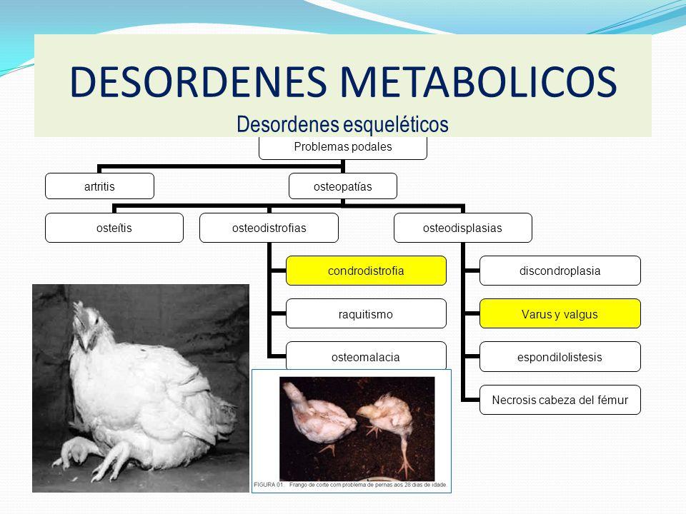 DESORDENES METABOLICOS Desordenes esqueléticos