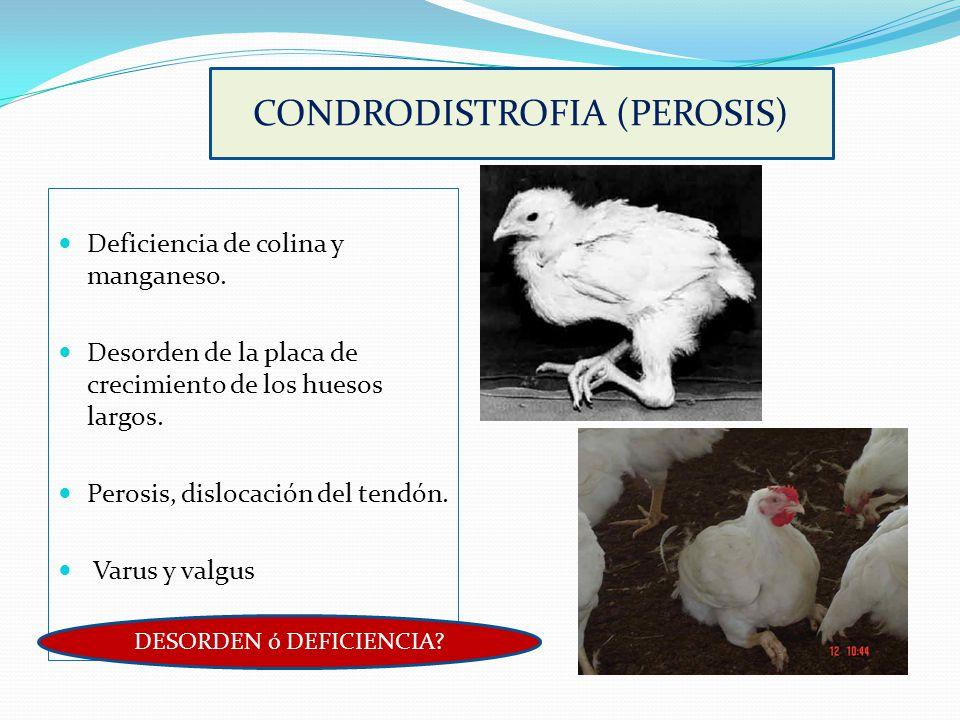 CONDRODISTROFIA (PEROSIS)