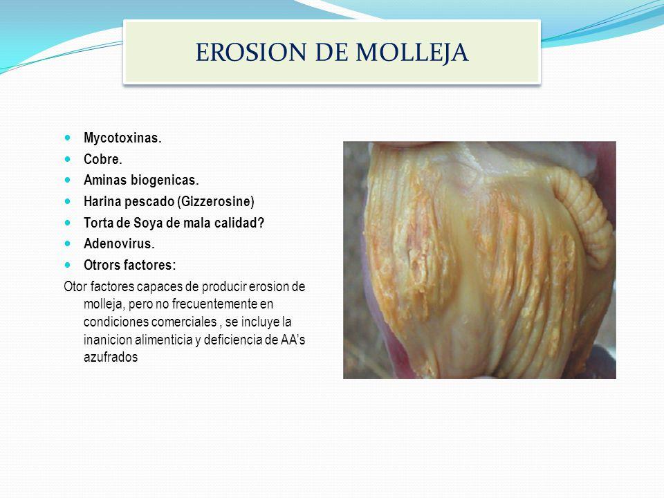 EROSION DE MOLLEJA Mycotoxinas. Cobre. Aminas biogenicas.