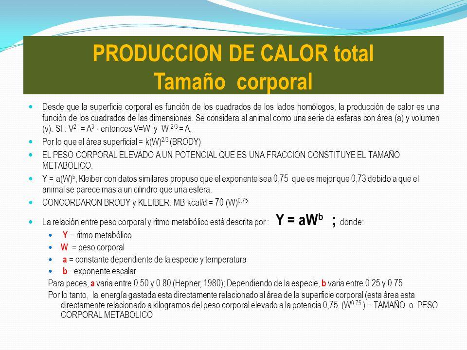 PRODUCCION DE CALOR total Tamaño corporal