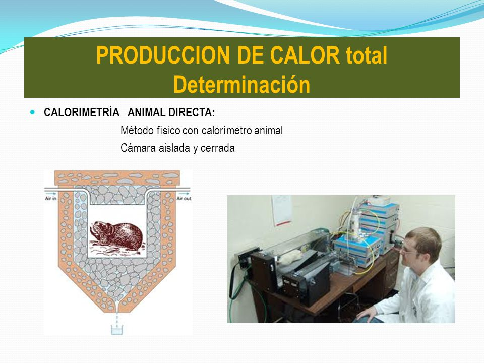 PRODUCCION DE CALOR total Determinación