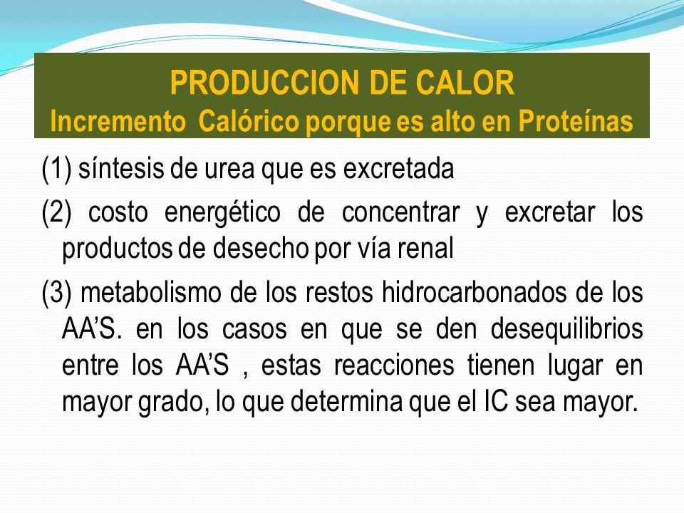 PRODUCCION DE CALOR Incremento Calórico porque es alto en Proteínas
