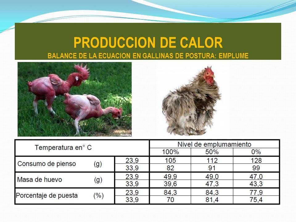PRODUCCION DE CALOR BALANCE DE LA ECUACION EN GALLINAS DE POSTURA: EMPLUME