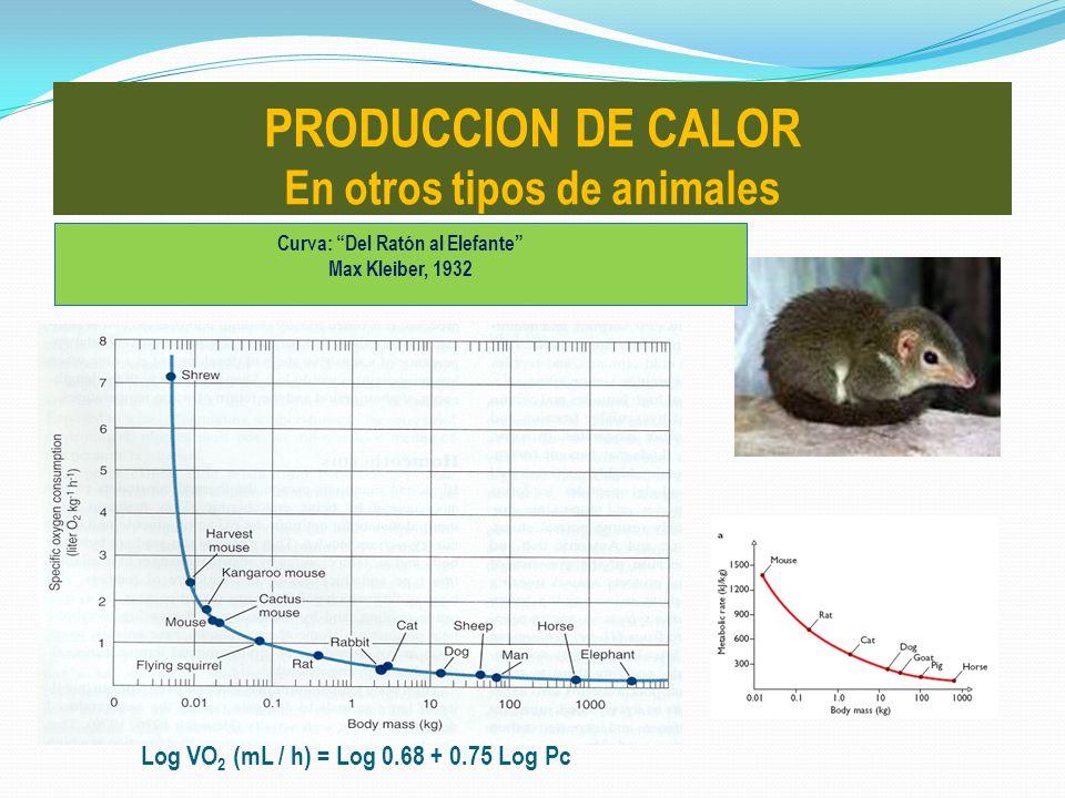 PRODUCCION DE CALOR En otros tipos de animales