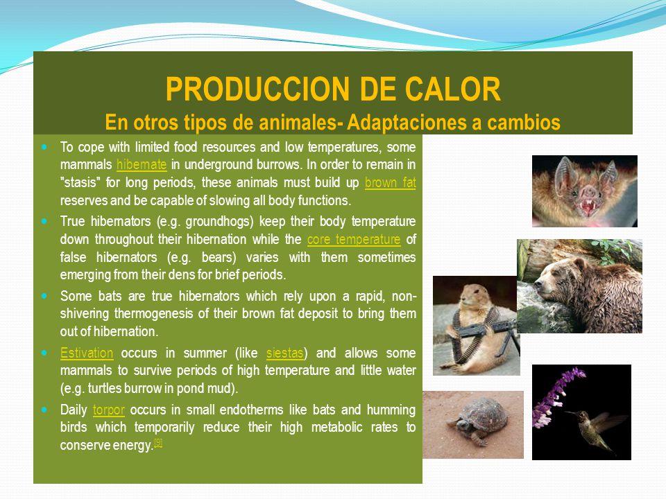 PRODUCCION DE CALOR En otros tipos de animales- Adaptaciones a cambios