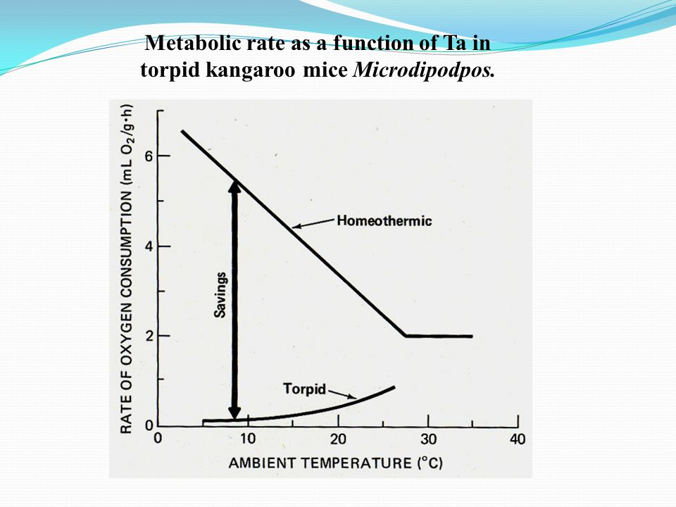 Metabolic rate as a function of Ta in torpid kangaroo mice Microdipodpos.