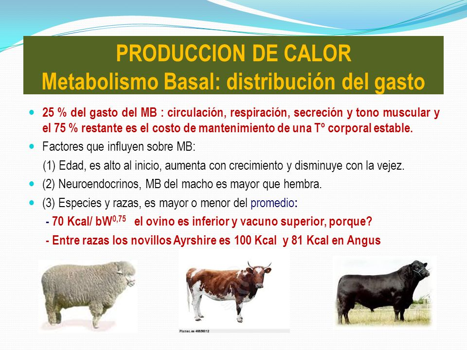 PRODUCCION DE CALOR Metabolismo Basal: distribución del gasto