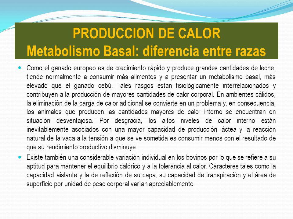 PRODUCCION DE CALOR Metabolismo Basal: diferencia entre razas