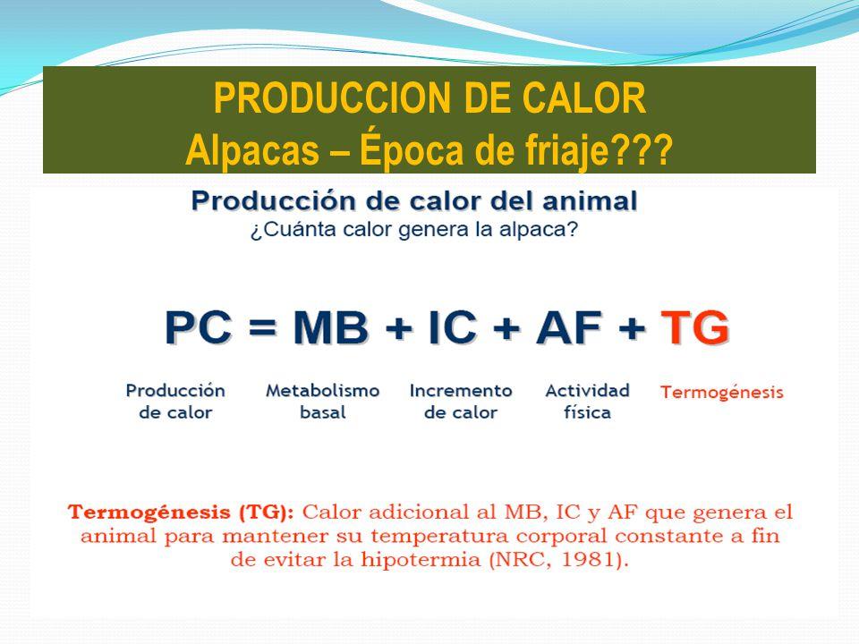 PRODUCCION DE CALOR Alpacas – Época de friaje