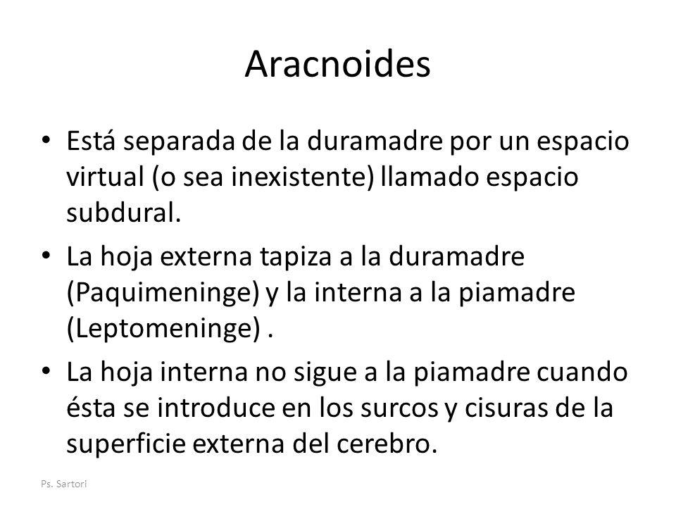 Aracnoides Está separada de la duramadre por un espacio virtual (o sea inexistente) llamado espacio subdural.