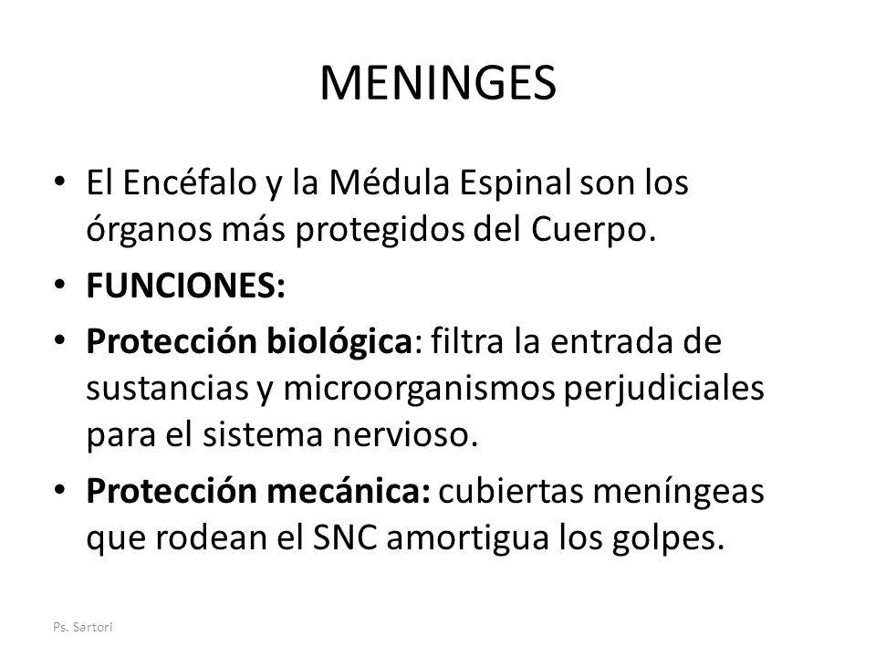 MENINGES El Encéfalo y la Médula Espinal son los órganos más protegidos del Cuerpo. FUNCIONES: