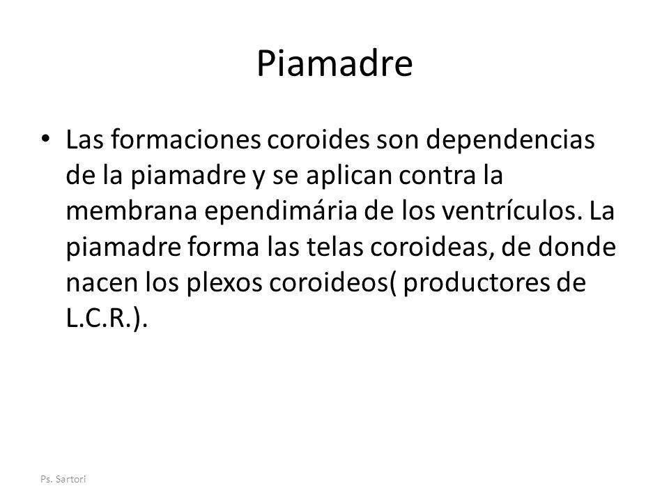 Piamadre