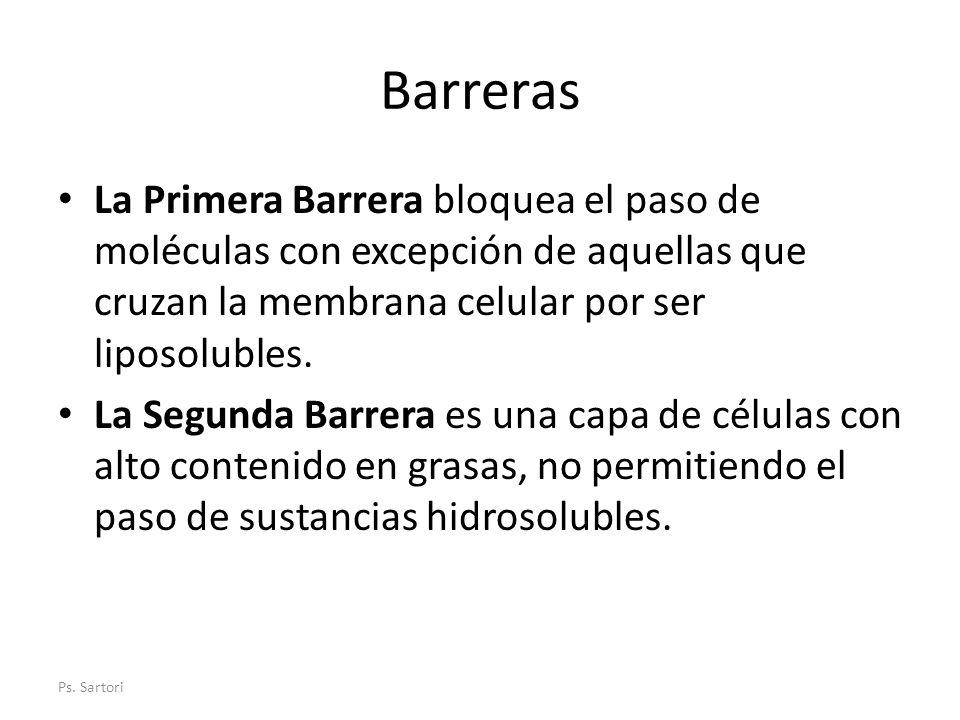 Barreras La Primera Barrera bloquea el paso de moléculas con excepción de aquellas que cruzan la membrana celular por ser liposolubles.