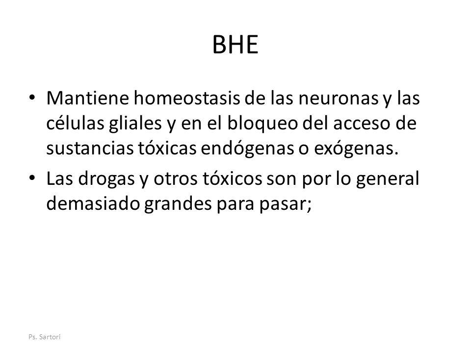 BHE Mantiene homeostasis de las neuronas y las células gliales y en el bloqueo del acceso de sustancias tóxicas endógenas o exógenas.
