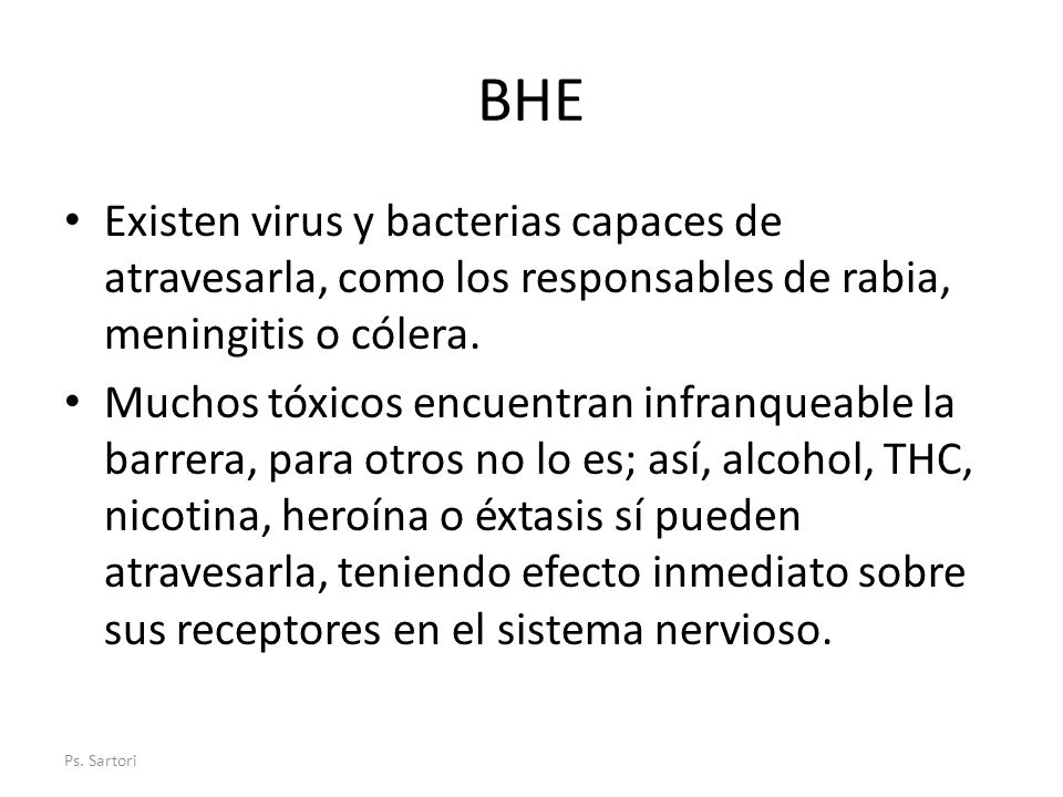 BHE Existen virus y bacterias capaces de atravesarla, como los responsables de rabia, meningitis o cólera.