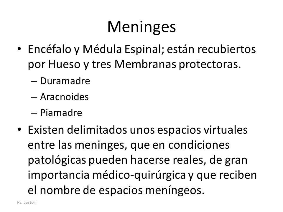 Meninges Encéfalo y Médula Espinal; están recubiertos por Hueso y tres Membranas protectoras. Duramadre.