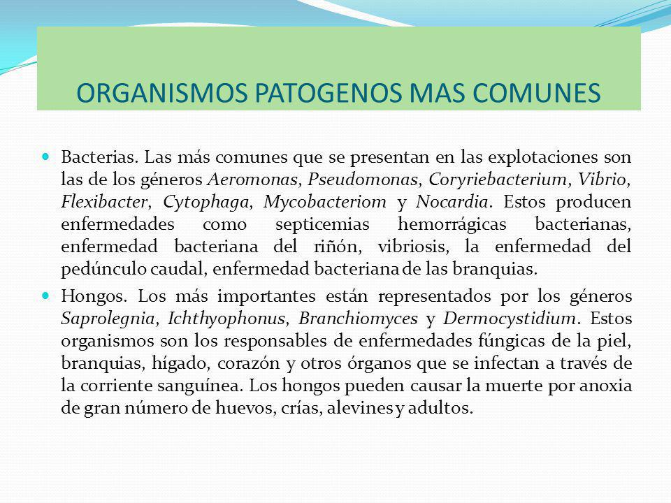 ORGANISMOS PATOGENOS MAS COMUNES