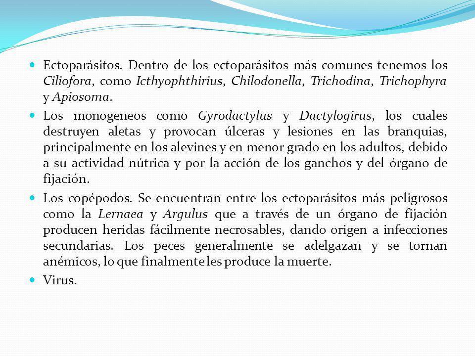 Ectoparásitos. Dentro de los ectoparásitos más comunes tenemos los Ciliofora, como Icthyophthirius, Chilodonella, Trichodina, Trichophyra y Apiosoma.