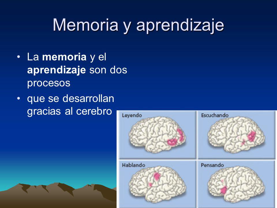 Memoria y aprendizaje La memoria y el aprendizaje son dos procesos