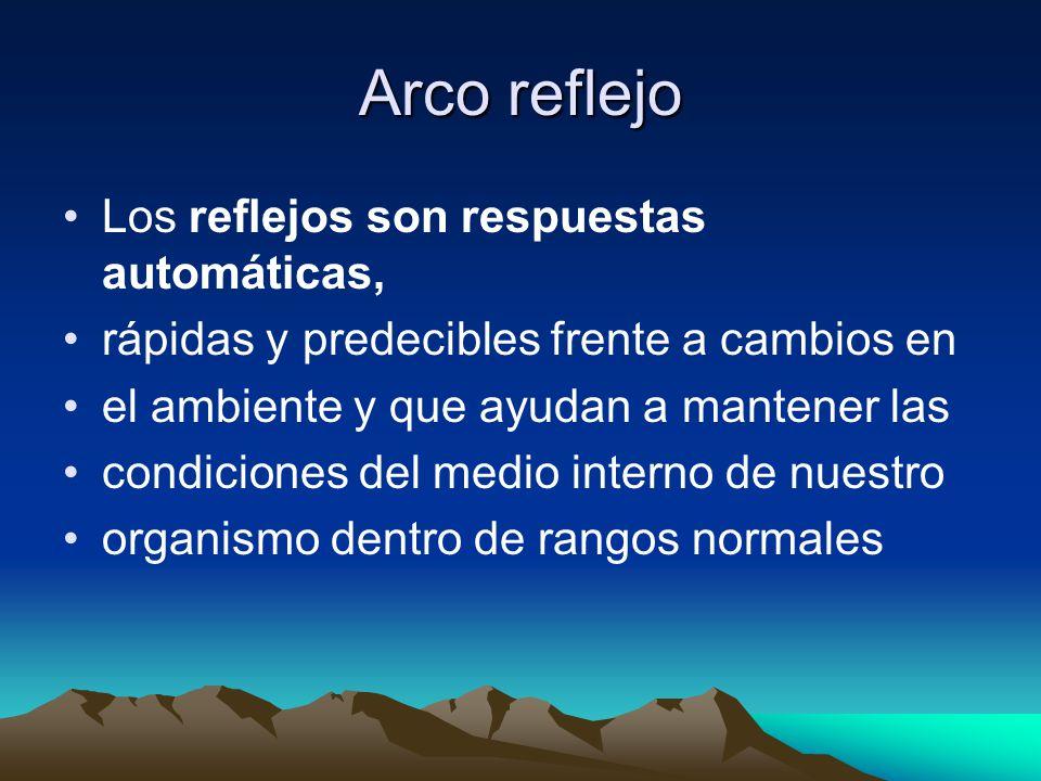 Arco reflejo Los reflejos son respuestas automáticas,