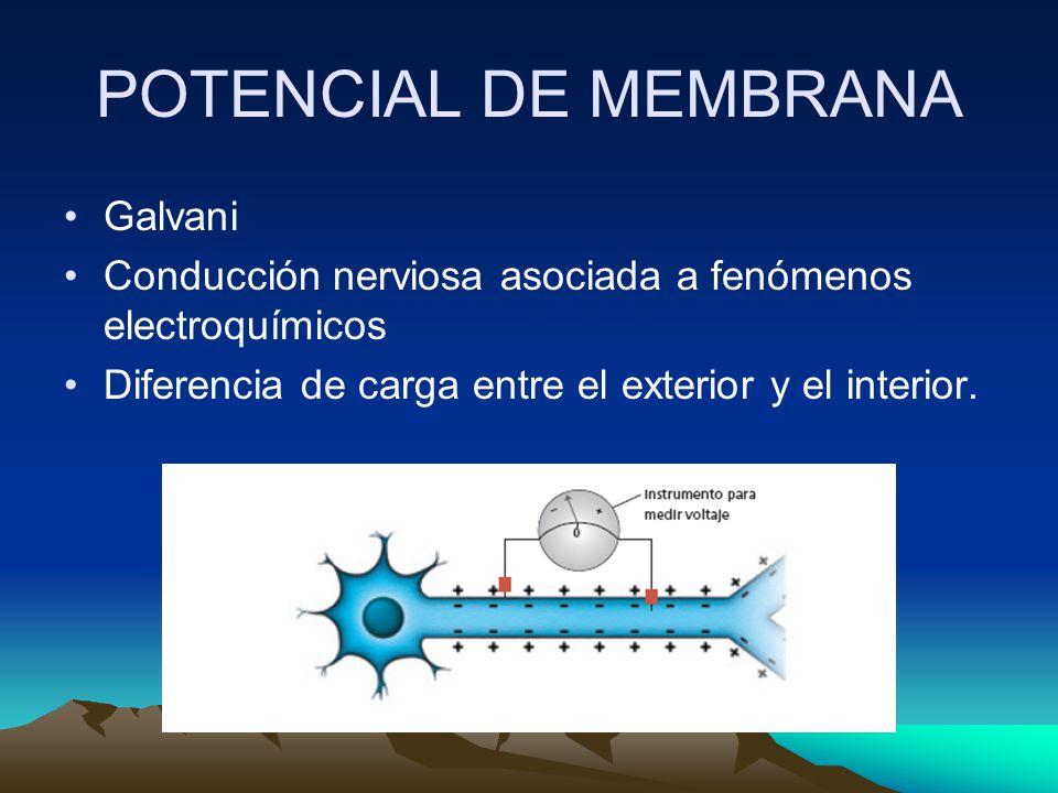 POTENCIAL DE MEMBRANA Galvani