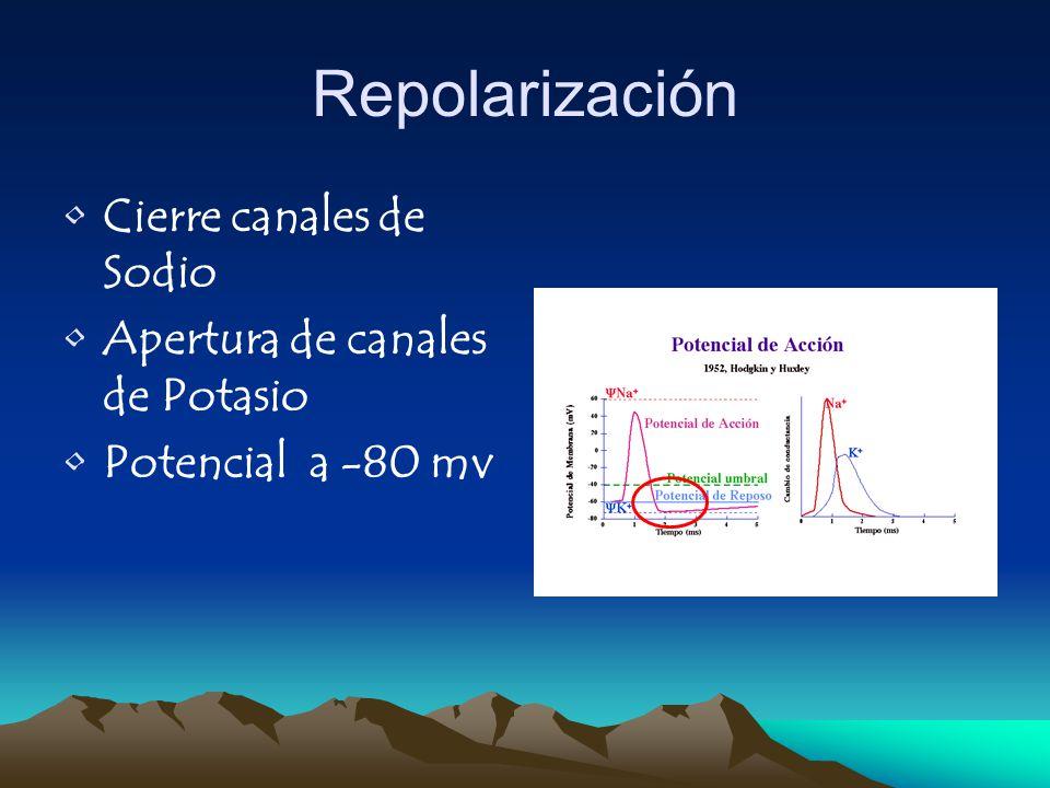 Repolarización Cierre canales de Sodio Apertura de canales de Potasio