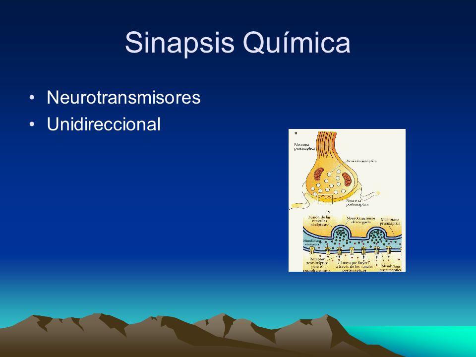 Sinapsis Química Neurotransmisores Unidireccional