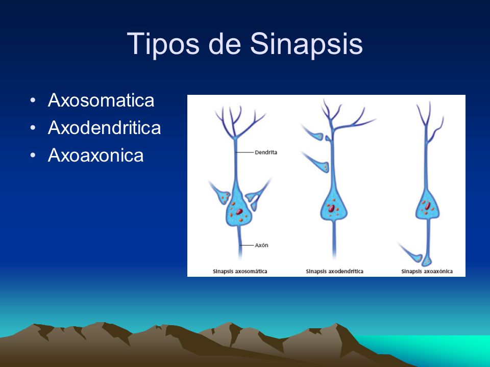 Tipos de Sinapsis Axosomatica Axodendritica Axoaxonica