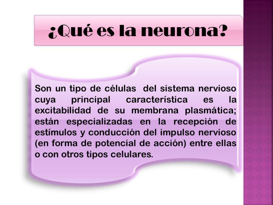 ¿Qué es la neurona