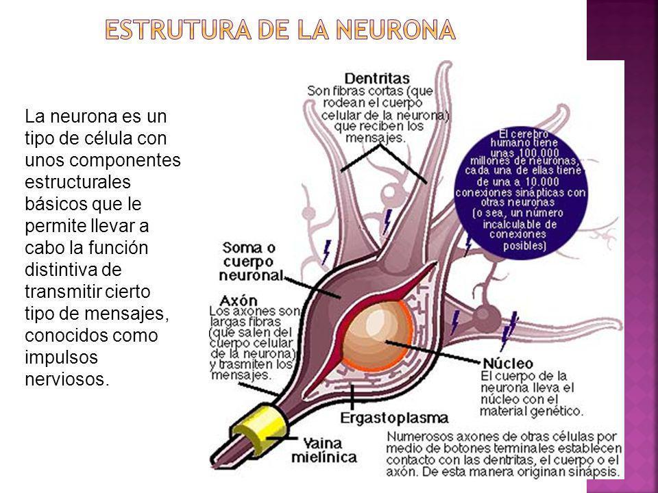 ESTRUTURA DE LA NEURONA