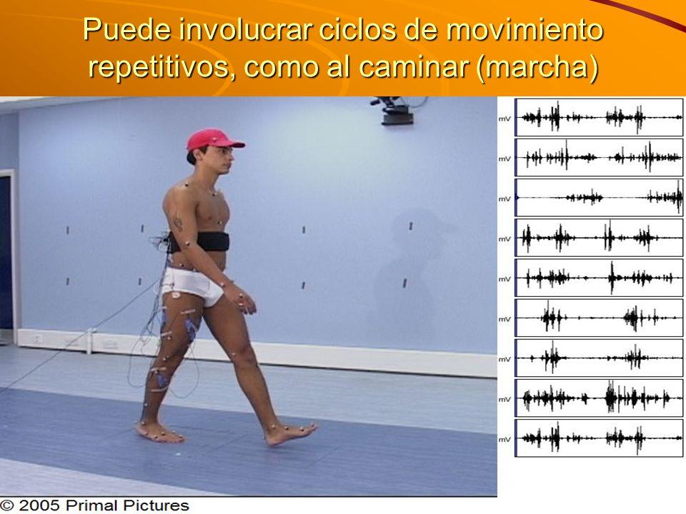 Puede involucrar ciclos de movimiento repetitivos, como al caminar (marcha)