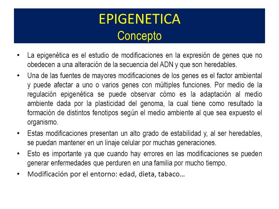 EPIGENETICA Concepto