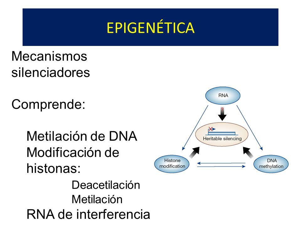 EPIGENÉTICA Mecanismos silenciadores Comprende: Metilación de DNA