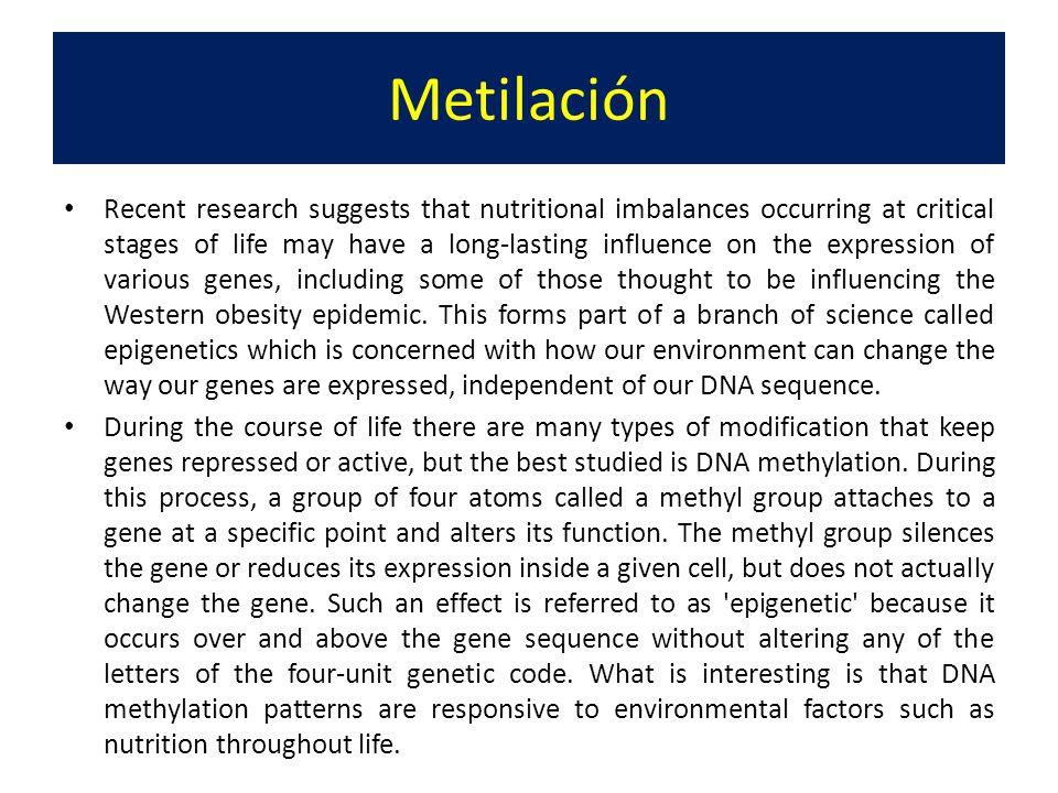 Metilación