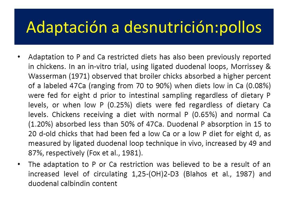 Adaptación a desnutrición:pollos