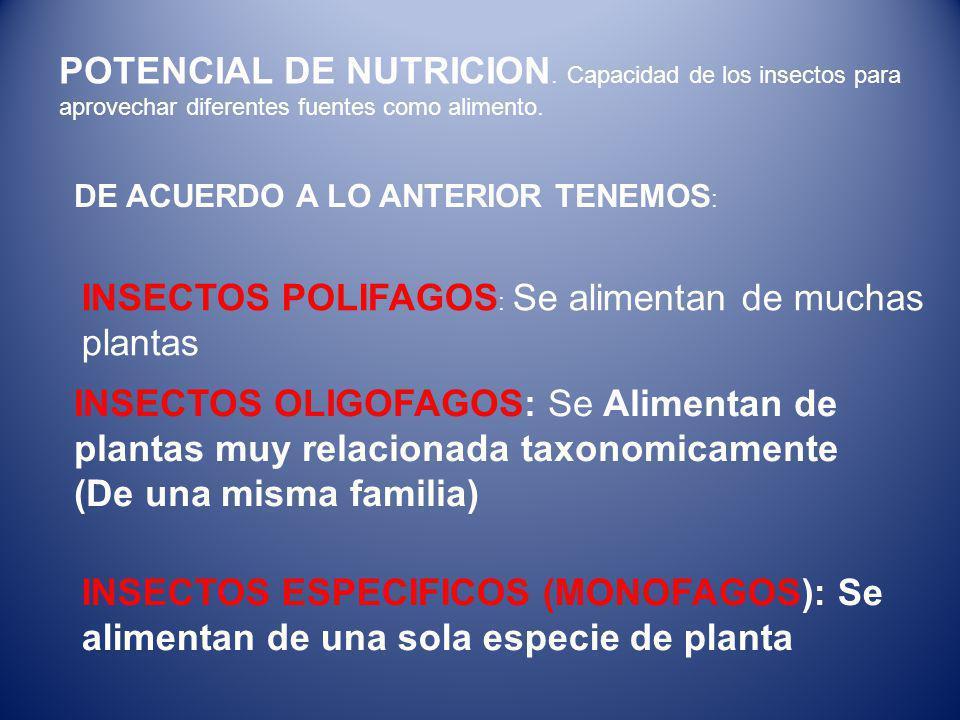 INSECTOS POLIFAGOS: Se alimentan de muchas plantas