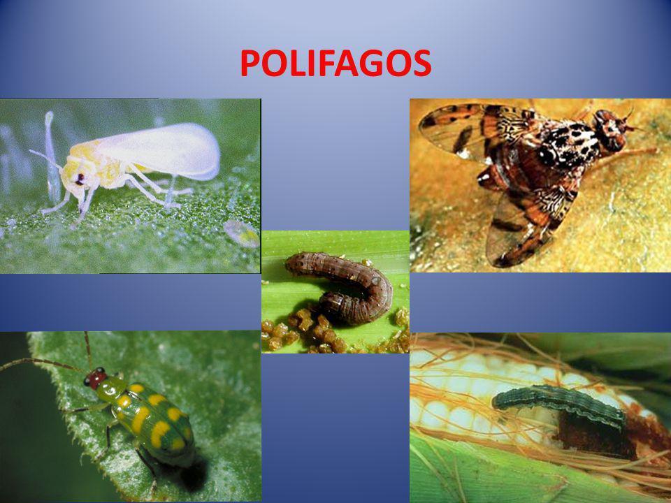 POLIFAGOS