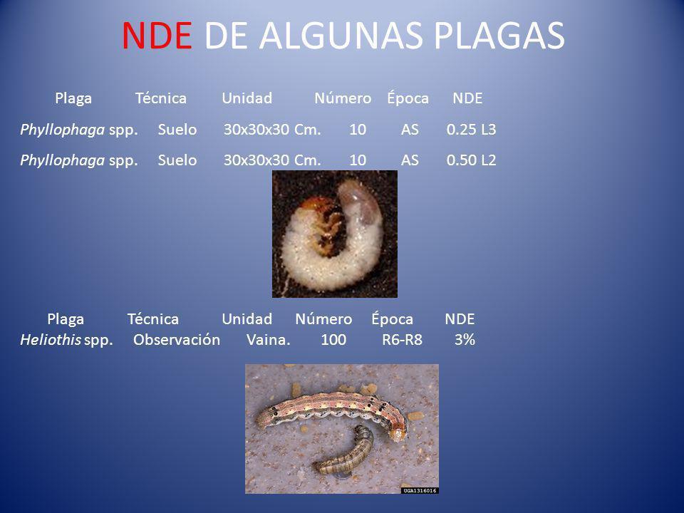 NDE DE ALGUNAS PLAGAS Plaga Técnica Unidad Número Época NDE