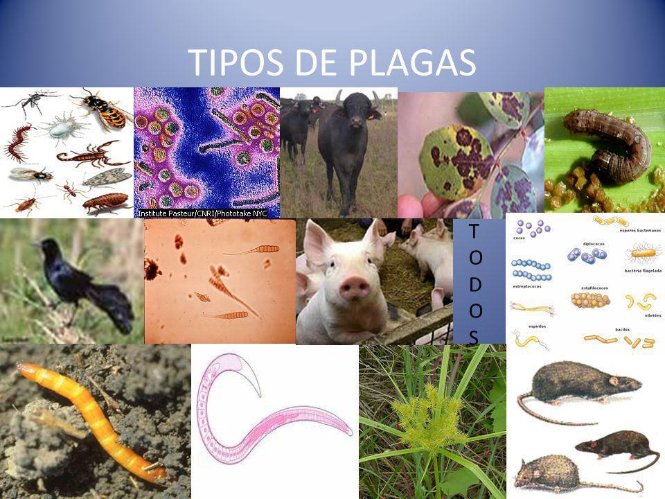 TIPOS DE PLAGAS TODOS