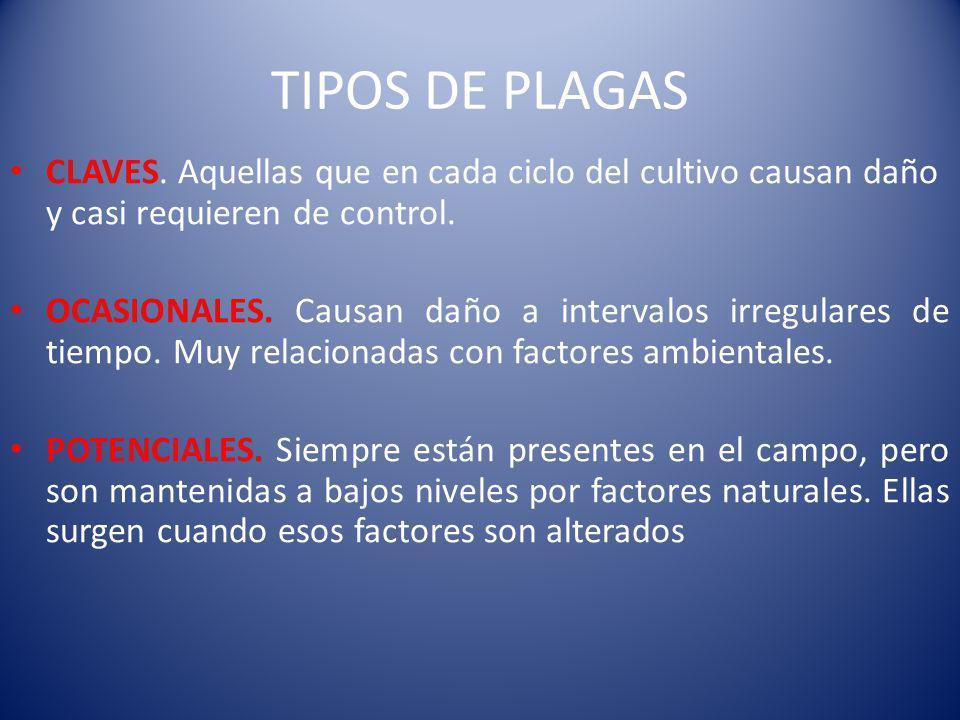 TIPOS DE PLAGAS CLAVES. Aquellas que en cada ciclo del cultivo causan daño y casi requieren de control.