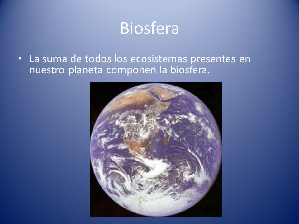 Biosfera La suma de todos los ecosistemas presentes en nuestro planeta componen la biosfera.