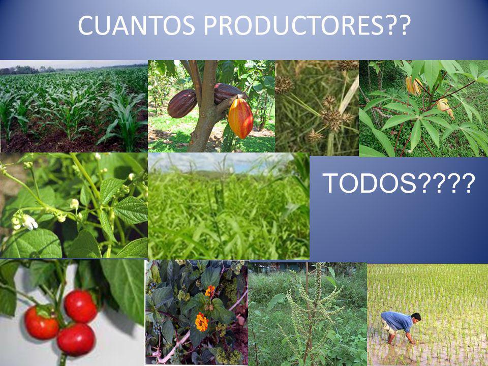 CUANTOS PRODUCTORES TODOS