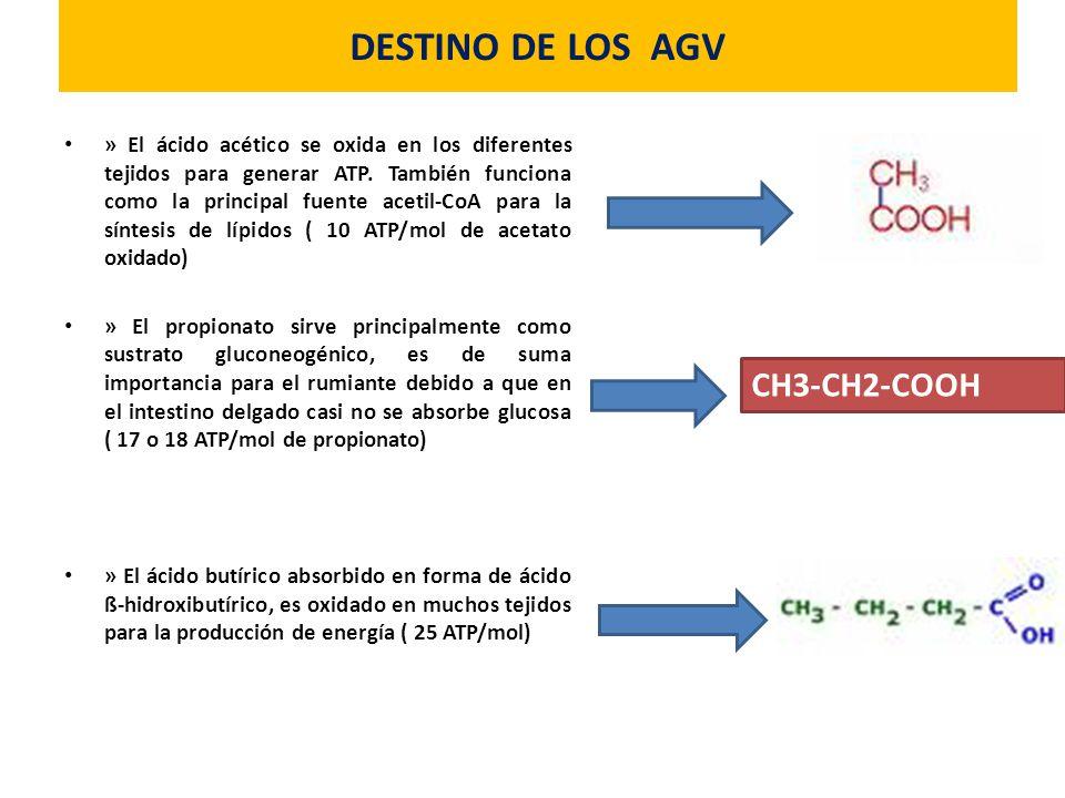 DESTINO DE LOS AGV CH3-CH2-COOH