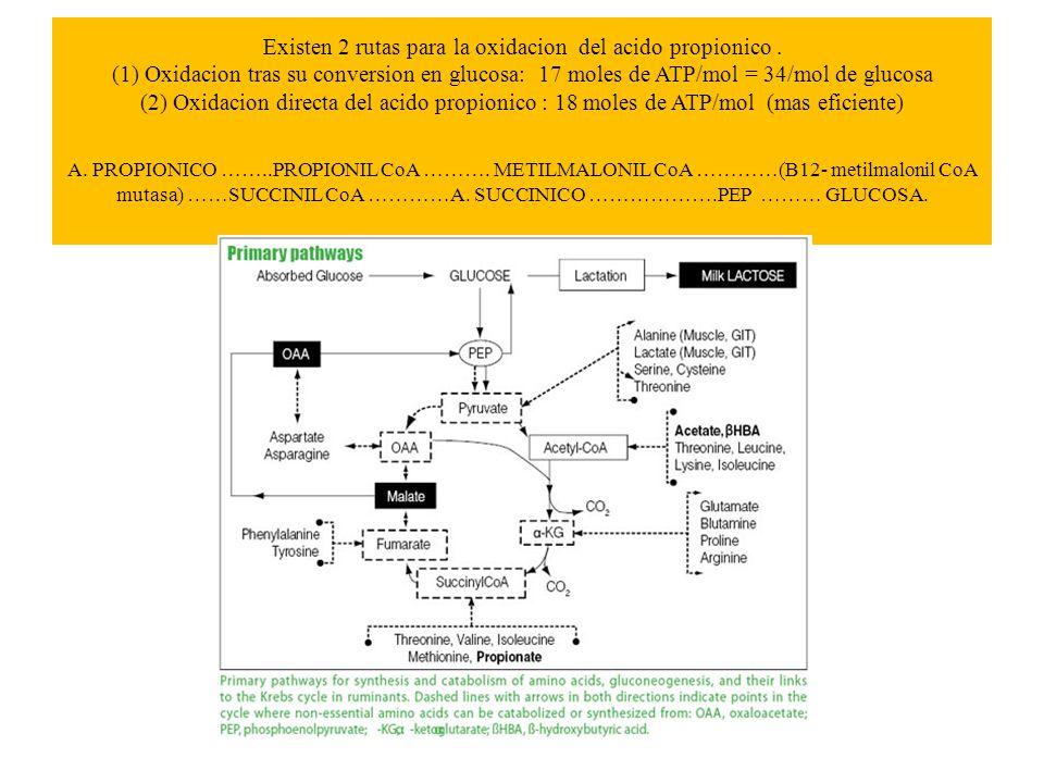 Existen 2 rutas para la oxidacion del acido propionico