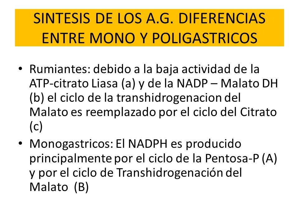 SINTESIS DE LOS A.G. DIFERENCIAS ENTRE MONO Y POLIGASTRICOS