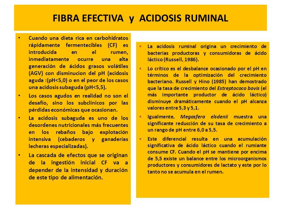 FIBRA EFECTIVA y ACIDOSIS RUMINAL