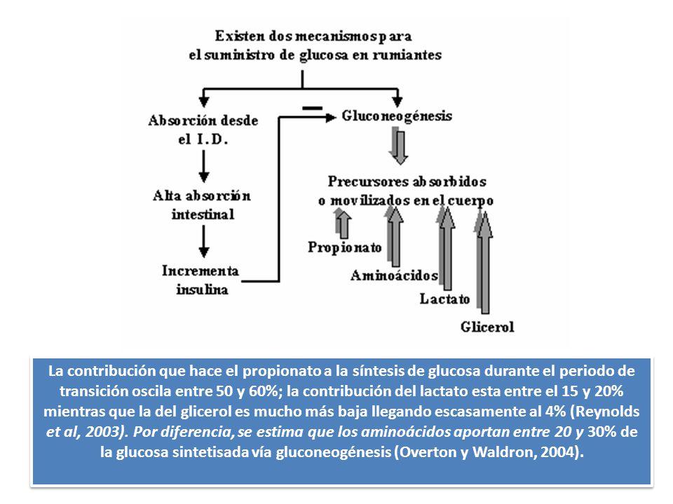 La contribución que hace el propionato a la síntesis de glucosa durante el periodo de transición oscila entre 50 y 60%; la contribución del lactato esta entre el 15 y 20% mientras que la del glicerol es mucho más baja llegando escasamente al 4% (Reynolds et al, 2003).