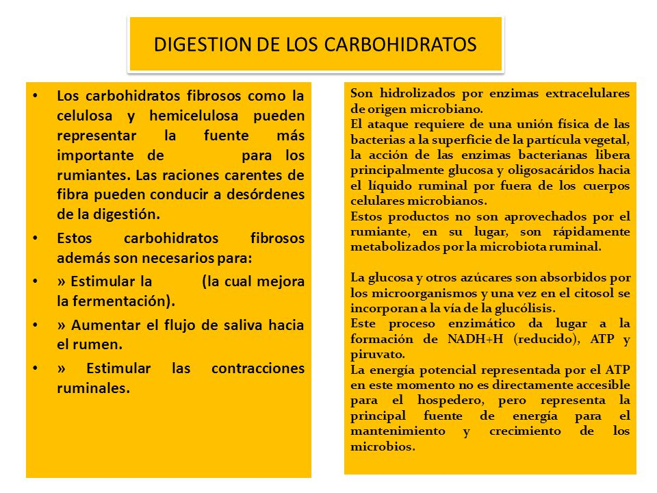 DIGESTION DE LOS CARBOHIDRATOS
